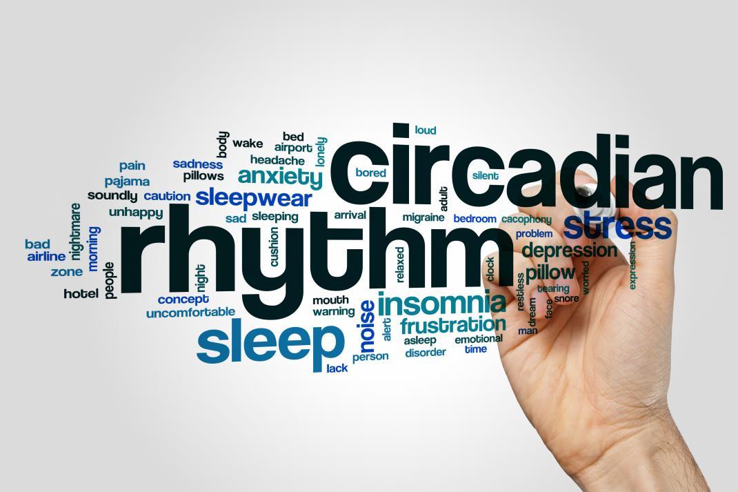 Microbiote et rythme circadien