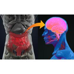 Microbiote et Maladie de Parkinson